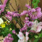 桃の花 春の花